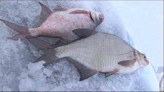 Рыбалка в подмосковье на можайсков водохранилище