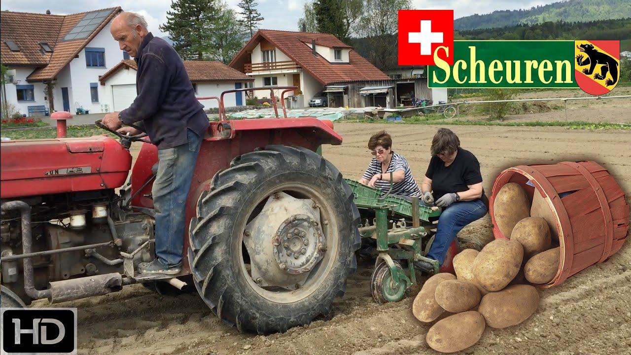 Potato Planting on Small Farm in Switzerland