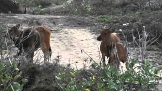 Bluer Pastures