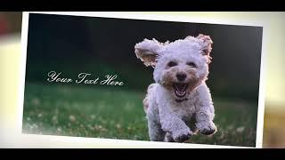 Happy slide photo for your best memories