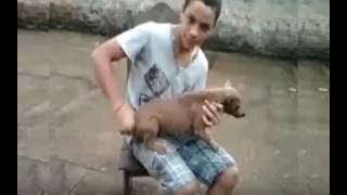 "Video Lucu ""Anjing jadi Kendaraan"""