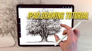 IPad Drawing tutorial - HOW TO DRAW AN OAK TREE