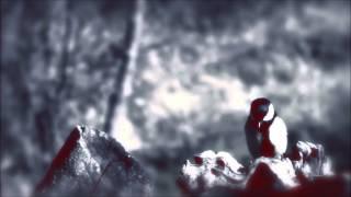 Julee Cruise - The Nightingale
