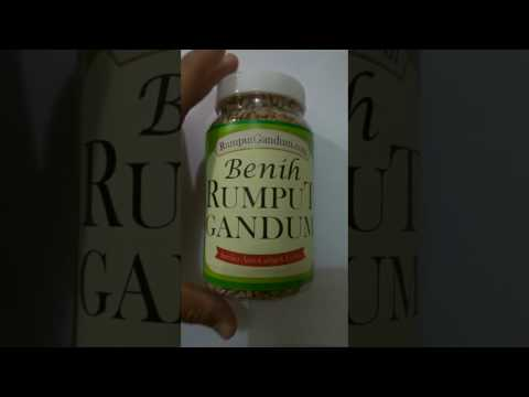 Video Benih Rumput Gandum