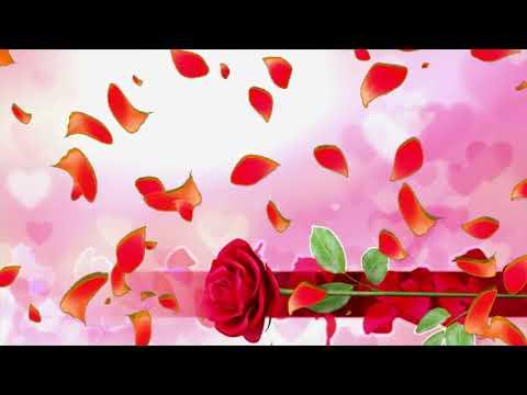 Футаж роза и лепестки