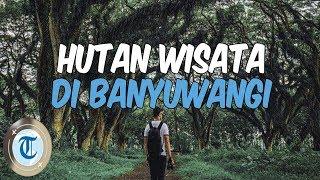 6 Hutan di Banyuwangi, Ada Wahana Seru untuk Liburan Akhir Pekan