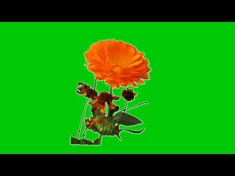 Green Screen Flowers Kinemaster Green Screen Flower Background