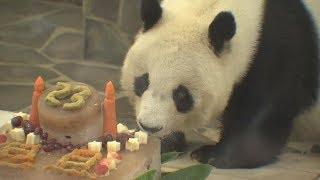 ジャイアントパンダ旦旦の23歳の誕生日会王子動物園