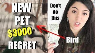 New Pet Bird | Don't Buy Wild Birds As Pets | Rescue Bird