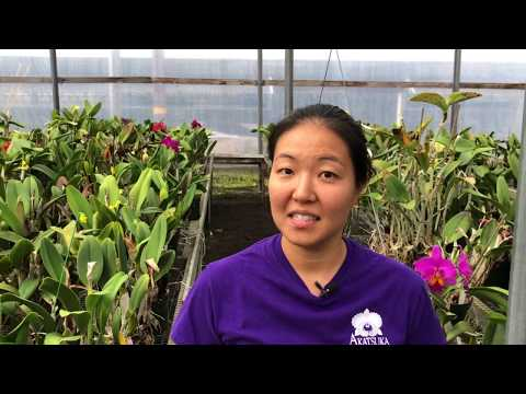 , title : 'AOG Orchid Pest Identification and Treatment