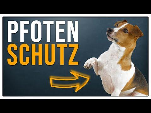TGH 129 Pfotenschuhe / Pfotenschutz für Hunde - Sinnvoll oder nicht? - Hundeschule Stadtfelle