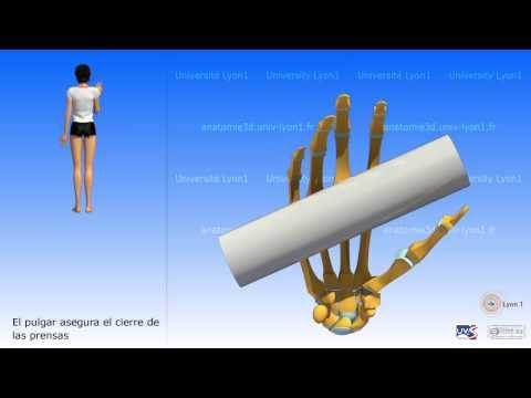 Posterior dislocación de la articulación del hombro
