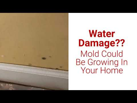 Hurricane Florence - Mold Removal Wilmington - Pride Cleaning - Call (910) 507-2060