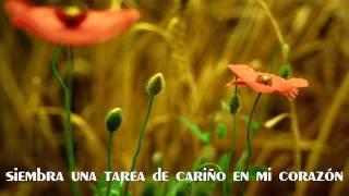 Reforestame - Juan Luis Guerra / Por Rodolfo Sánchez V.