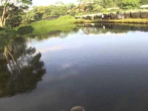 YAK ATTACK LANDBASE – Exclusive Private Pond Visit