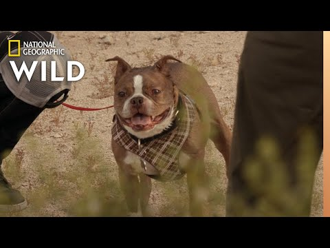 A Dog With a Mean Bite | Dog: Impossible
