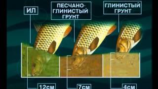 Рыбалка на сазан в саратовском водохранилище
