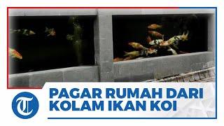 Viral Video Pagar Rumah dari Kolam Ikan Koi, Pemilik Sebut Ada 70-80 Ekor & Telan Biaya Puluhan Juta