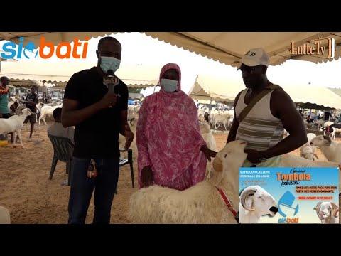 Opération Tabaski chez Balla Diouf : Cette dame surprise après avoir gagné un mouton avec SIOBATI
