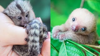 Cute Baby Animal Videos Compilation To Brighten Your Day - For Animal Lovers