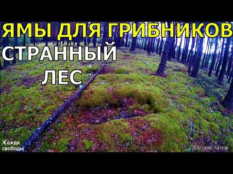 Ямы для трупов! Не кушайте грибы!! Кладбище неопытных грибников. УкрТур 2. Серия 8