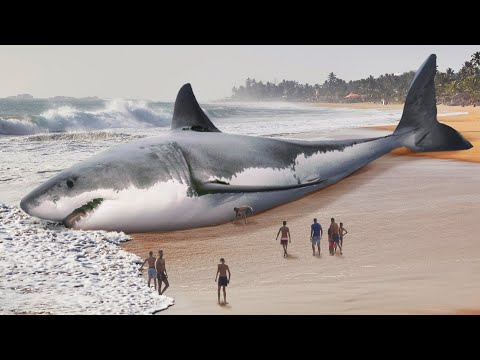 Megalodon Went Extinct Because of Great White Sharks