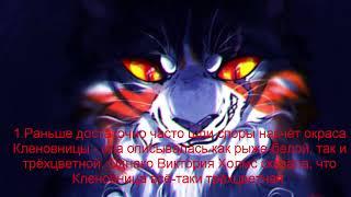 Факты о Кленовнице Коты Воители!