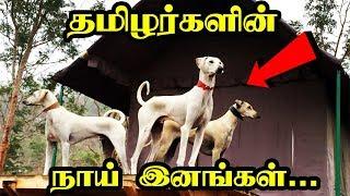 தமிழர்களின் நாய் இனங்கள் | Native Dog Breeds | 5 Min Videos