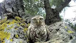 Смешные совы / Funny owls