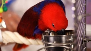 What Toys & Supplies Do You Need? | Pet Bird