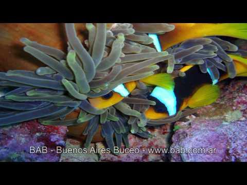 BUCEO - Fotografía y Video Subacuático en Alta Definición - www.bab.com.ar