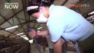 City Girl Turned Quail Farmer? (Quail Farming Pt 1)