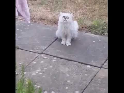 Weird looking cat