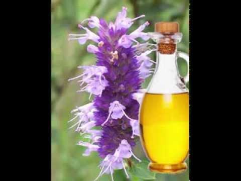 Video Hyssop Oil Health Benefits