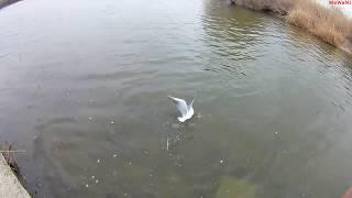 Рыбалка на реке мертвый донец ростовская область