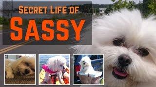Secret Life of Sassy
