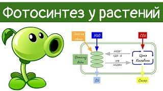 Фотосинтез у растений | самое простое объяснение