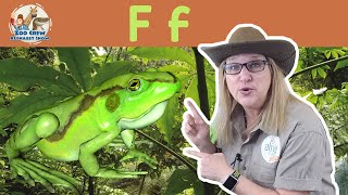 Zoo Crew Alphabet Show | Frogs and Letter F