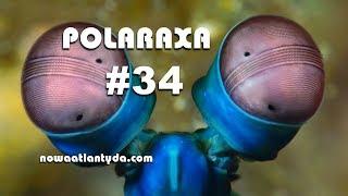 Polaraxa 34 – Majówka