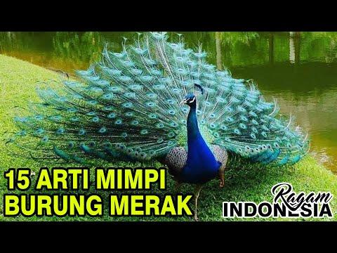 15 arti mimpi burung merak menurut primbon jawa #ragamindonesia #tafsirmimpi #primbonjawa