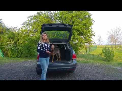 Il tuo cane si butta giù dalla macchina appena apri il baule?