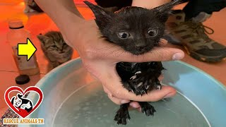 Poor Kitten, Eating Leftovers In The Landfill, Fnny With First Bath/ Rescue animals TN Center