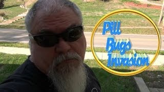 Pill Bugs Invasion