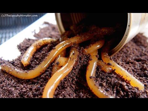 Beet juice sa pamamagitan bulating parasito