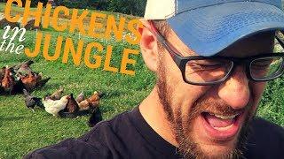 Chickens In The Jungle