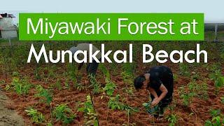 Miyawaki Forest at Munakkal Beach, Thrissur