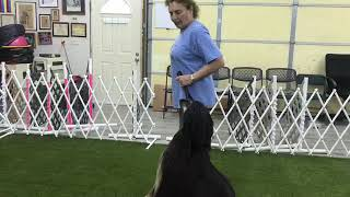 How To Keep A Dog From Lagging On A Figure 8