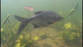 Где ловить щуку на озере плещеево