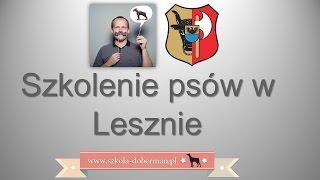 preview picture of video 'Szkolenie psów Leszno - bardzo skuteczna tresura psa w Lesznie - Szkoła Doberman indywidualne lekcje'