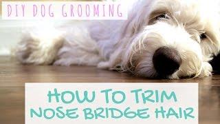 DIY Dog Grooming - Goldendoodle Grooming Around Eyes